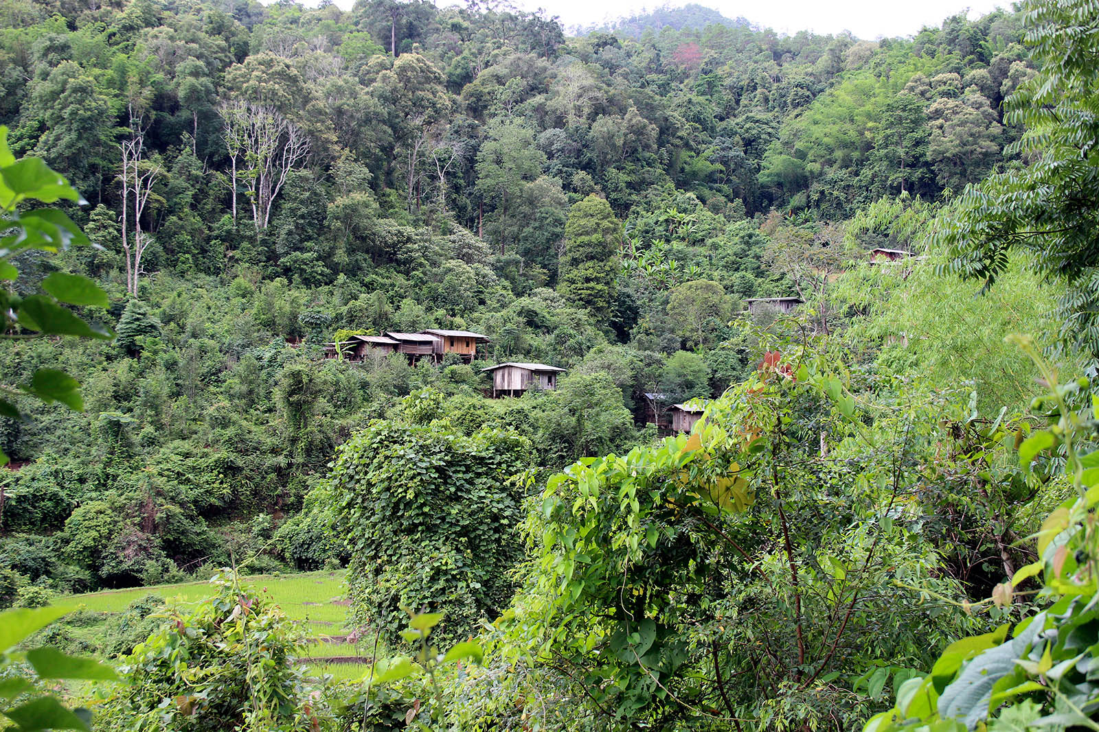 Karen Village | Chiang Mai Trekking | The best trekking in Chiang Mai with Piroon Nantaya