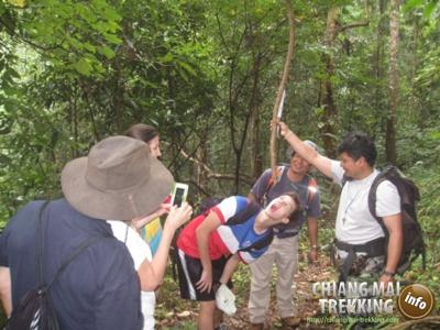 Doi Suthep & Daytrip Trekking | Chiang Mai Trekking | The best trekking in Chiang Mai with Piroon Nantaya