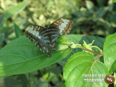 Tiger Kingdom, Orchid & Butterfly Farm | Chiang Mai Trekking | The best trekking in Chiang Mai with Piroon Nantaya